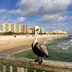 Pelican on Pompano Beach Pier | Pompano Beach FL Locksmith