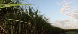 Belle Glade Locksmith | Sugar Cane Field | Lock N More
